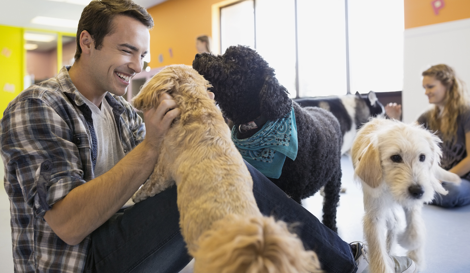 Benefits of Admitting Your Pet in a Dog Daycare